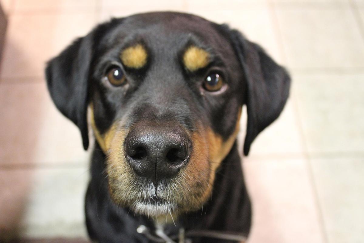 Pieski, kotki, zwierzoluby i alergia